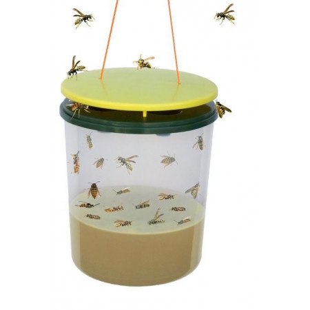 WASPS TRAP