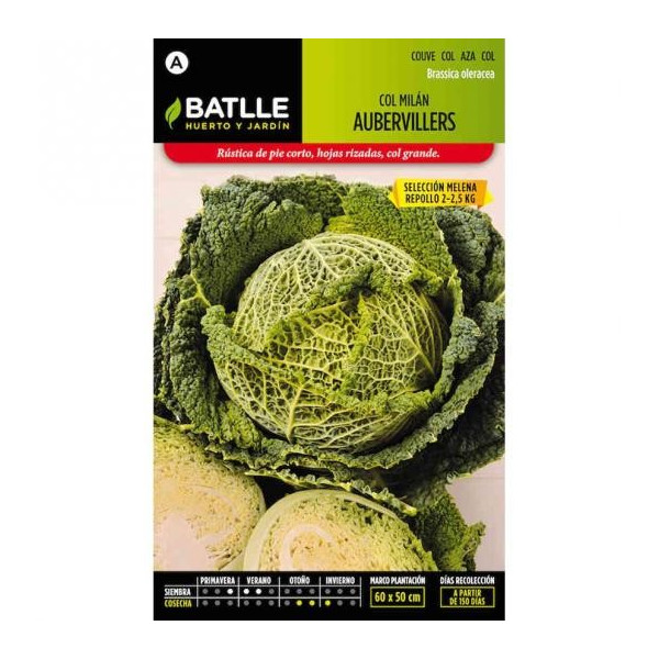 CABBAGE MILAN AUBERBILLIERS SEL. MELENA