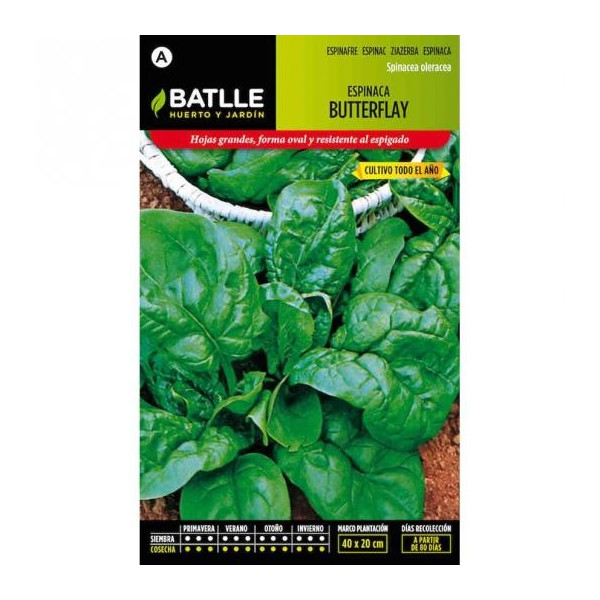 BUTTERFLY SPINACH