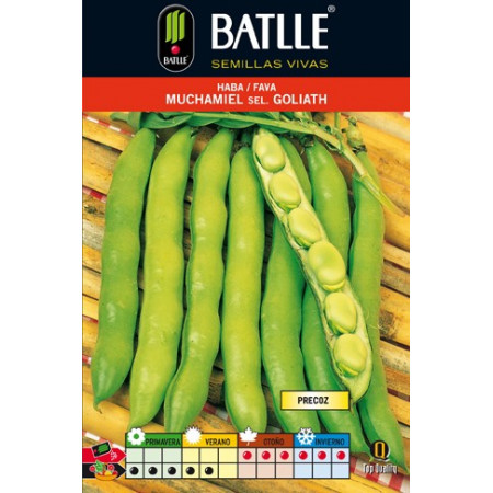 MUCHAMIEL BROAD BEAN SEL. GOLIATH