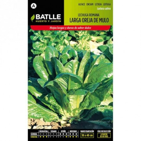 LONG ROMAINE LETTUCE MULE EAR S/N
