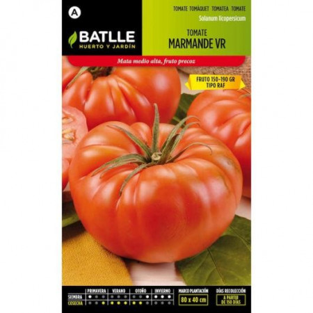 TOMATE MARMANDE VR TYPE HOLLAND
