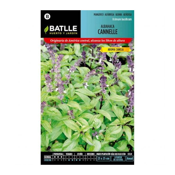 CANNELLE BASIL