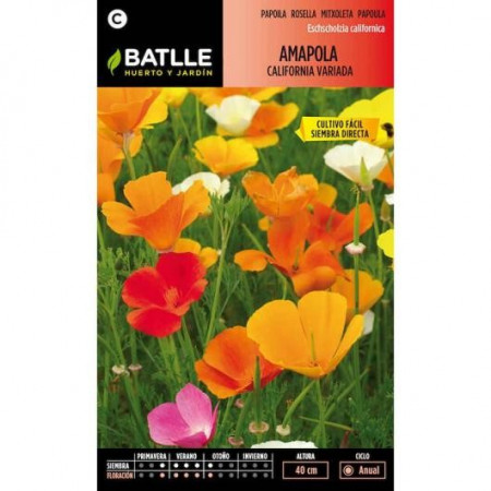 VARIED CALIFORNIA POPPY