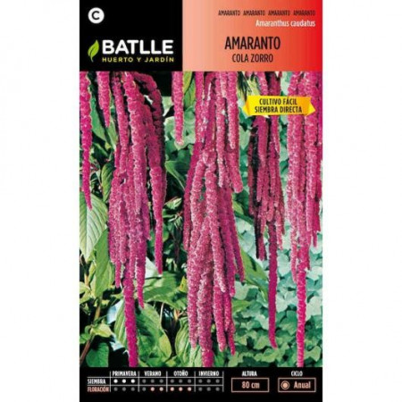 FOX TAIL AMARANTH