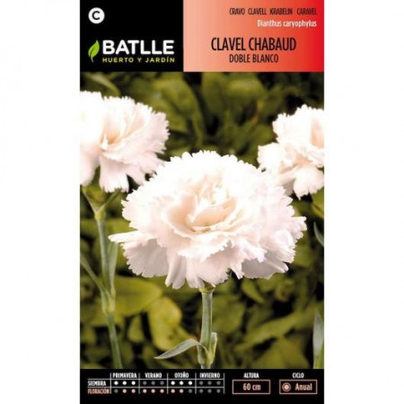 WHITE CHABAUD CARNATION