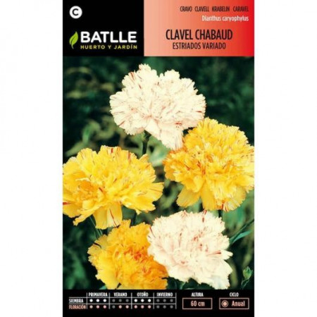 DOUBLE GROOVED CHABAUD CARNATION