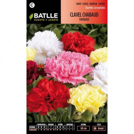 VARIED CHABAUD CARNATION