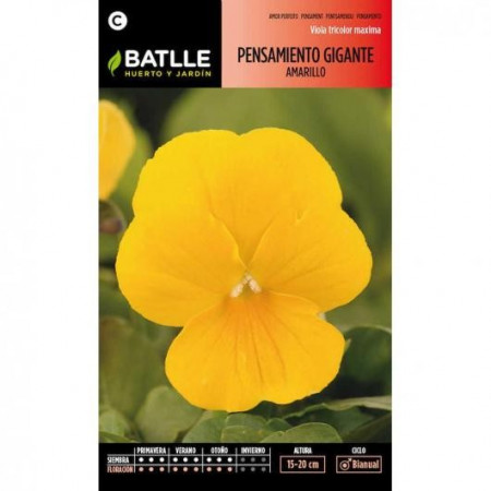 YELLOW GIANT PANSY