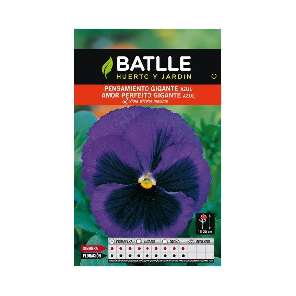 BLUE GIANT PANSY