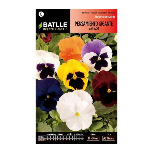 VARIATED GIANT PANSY