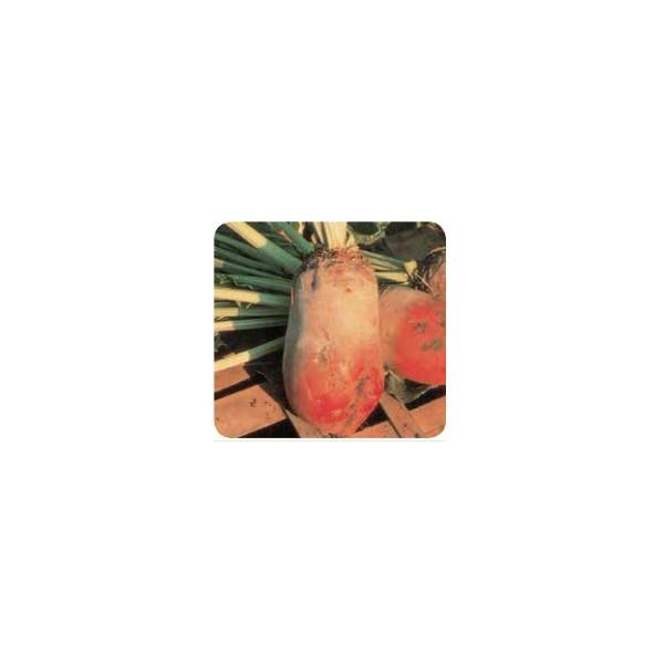 RED BEET ECKENDORF