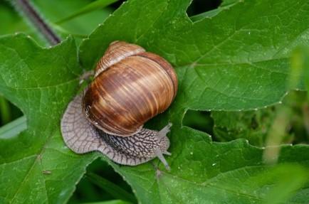 Ahuyentadores y repelentes de caracoles