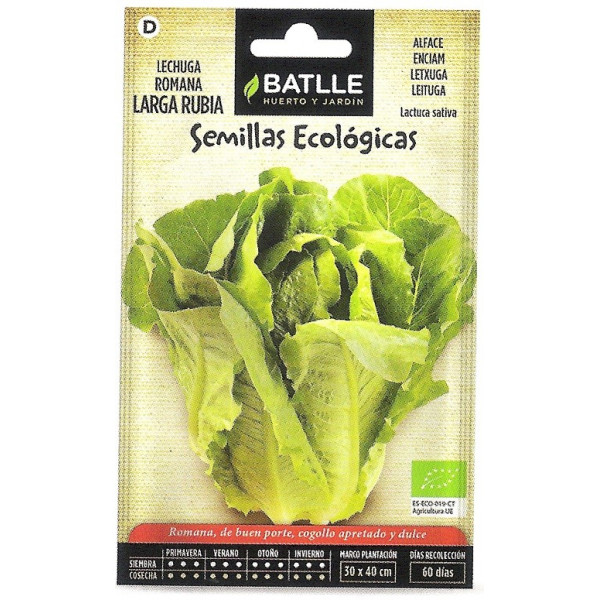 LETTUCE ROM.LARGE BLONDE-ECO