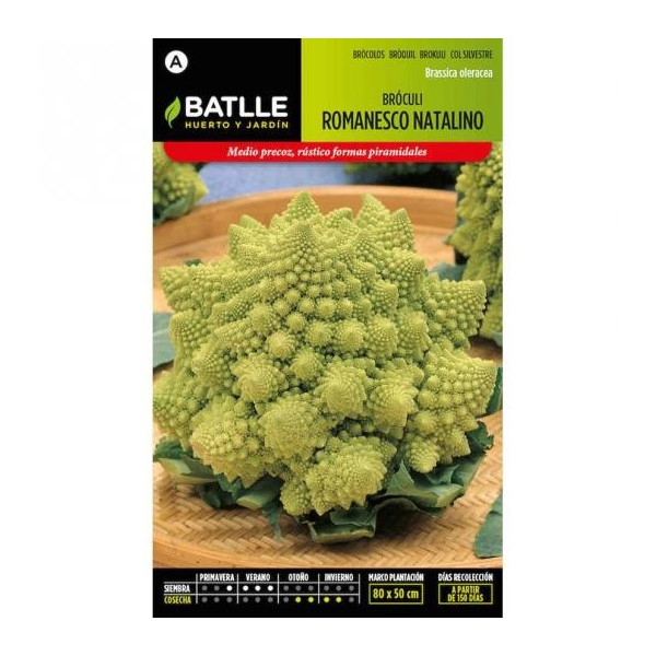 ROMANESCO BROCCOLI NATALINO