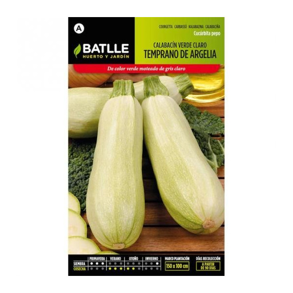 LIGHT GREEN EARLY ZUCCHINI FROM ALGERIA
