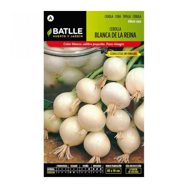 WHITE QUEEN ONION