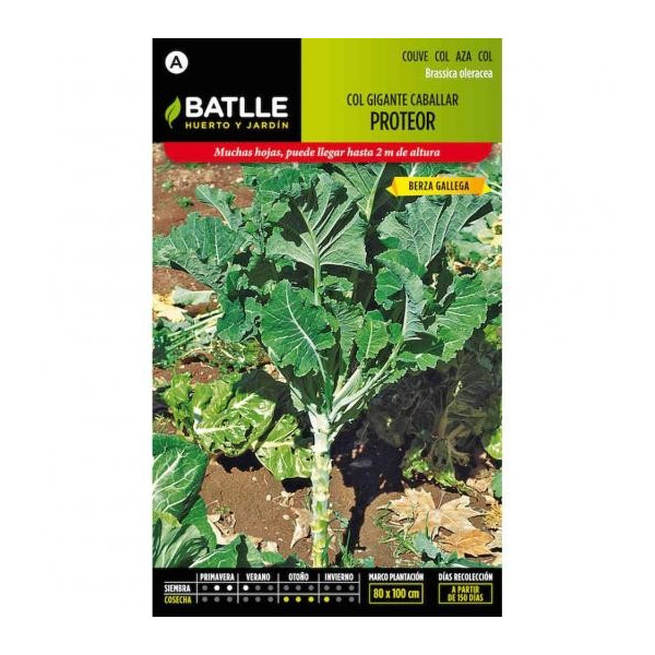 GIANT COLLARDS CABALLAR (PROTEOR)