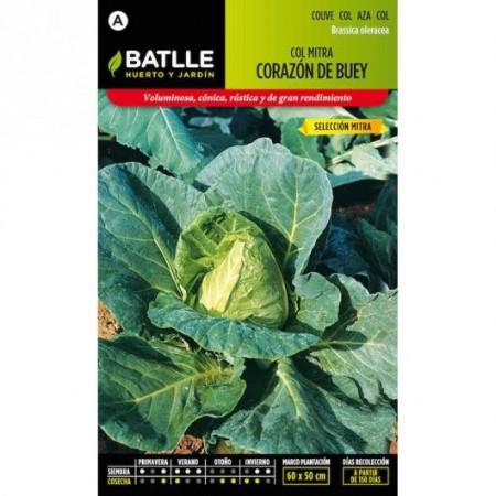 OX HEART CABBAGE SEL. MITRA