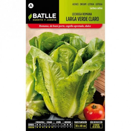 LONG LIGHT GREEN ROMAINE LETTUCE