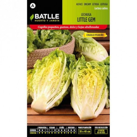 LETTUCE LITTLE GEM SMALL HEART