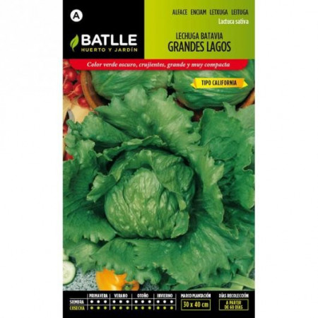 BATAVIA LETTUCE BIG LAKES CALIFORNIA TYPE