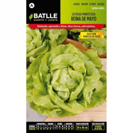 BUTTERHEAD LETTUCE MAY QUEEN SEL. MAY PRINCESS