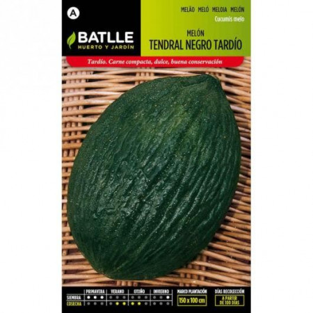 LATE BLACK MELON TENDRAL