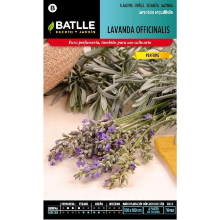 OFFICINALIS LAVENDER