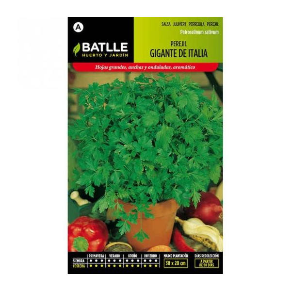 GIANT PARSLEY FROM ITALY