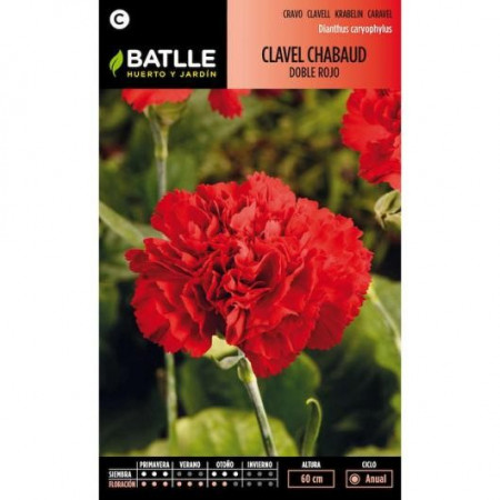 RED CHABAUD CARNATION