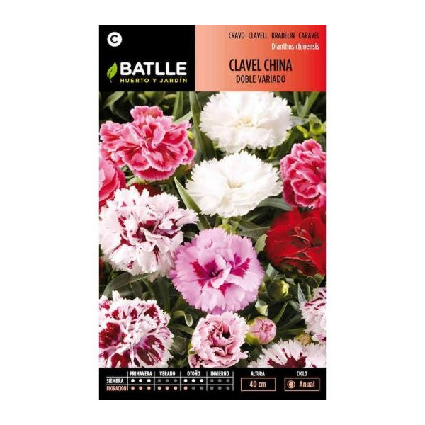 BIG DOUBLE FLOWER CHINA CARNATION