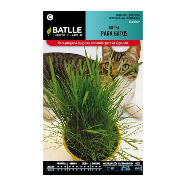 GRASS FOR CATS