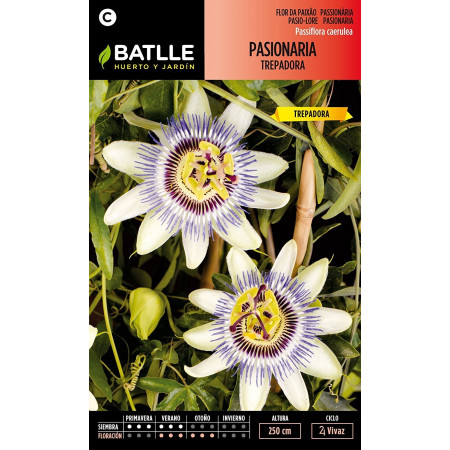 WHITE CLIMBING PASSIONFLOWER