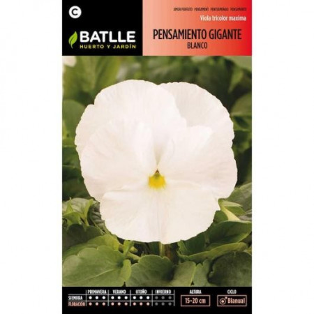WHITE GIANT PANSY