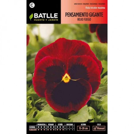 FIRE RED GIANT PANSY