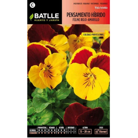 HYBRID FELINE RED-YELLOW PANSY