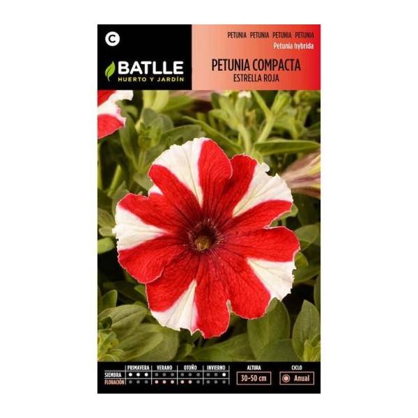 RED STAR COMPACT PETUNIA