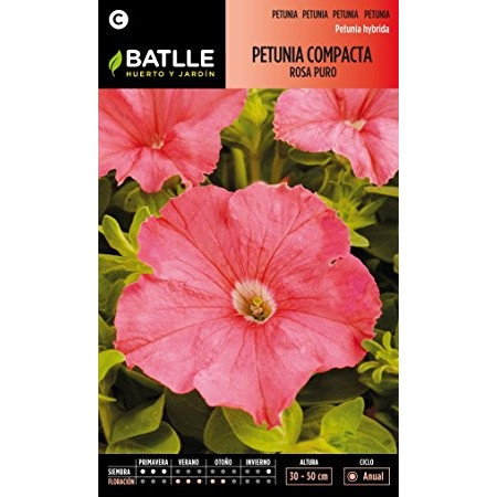 PURE PINK COMPACT PETUNIA