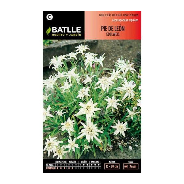 LADY'S MANTLE - EDELWEISS
