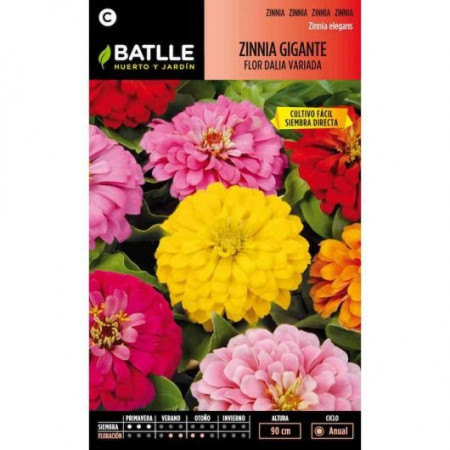 GIANT DALIA FLOWER ZINNIA