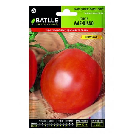 Graines de tomates valenciennes