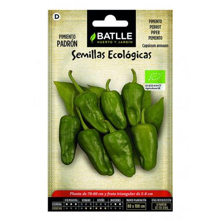 Organic seeds padrón pepper