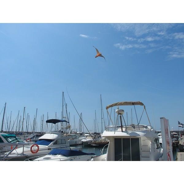 Ahuyentadores de aves para embarcaciones